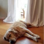 se-admiten-mascotas-cantabria-hosteria-arnuero